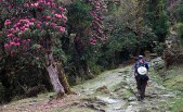 Preserving pristine forests of Sikkim