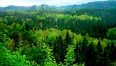 PREVENTION NOT CURES – WHAT FORESTS CAN DO IN A TIME OF GLOBAL PANDEMICS