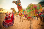 March 30 – Rajasthan State Day