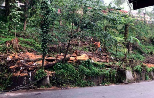 400 trees felled to make way for Smart City road extension