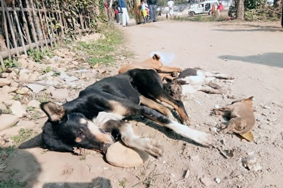 Five stray dogs poisoned to death near Bagdogra