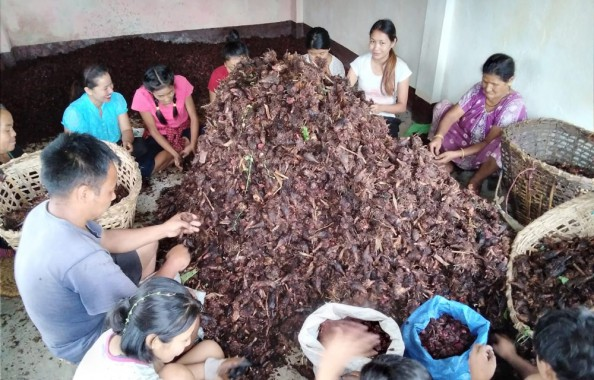 Sikkim cardamom farmers at loss as prices dip